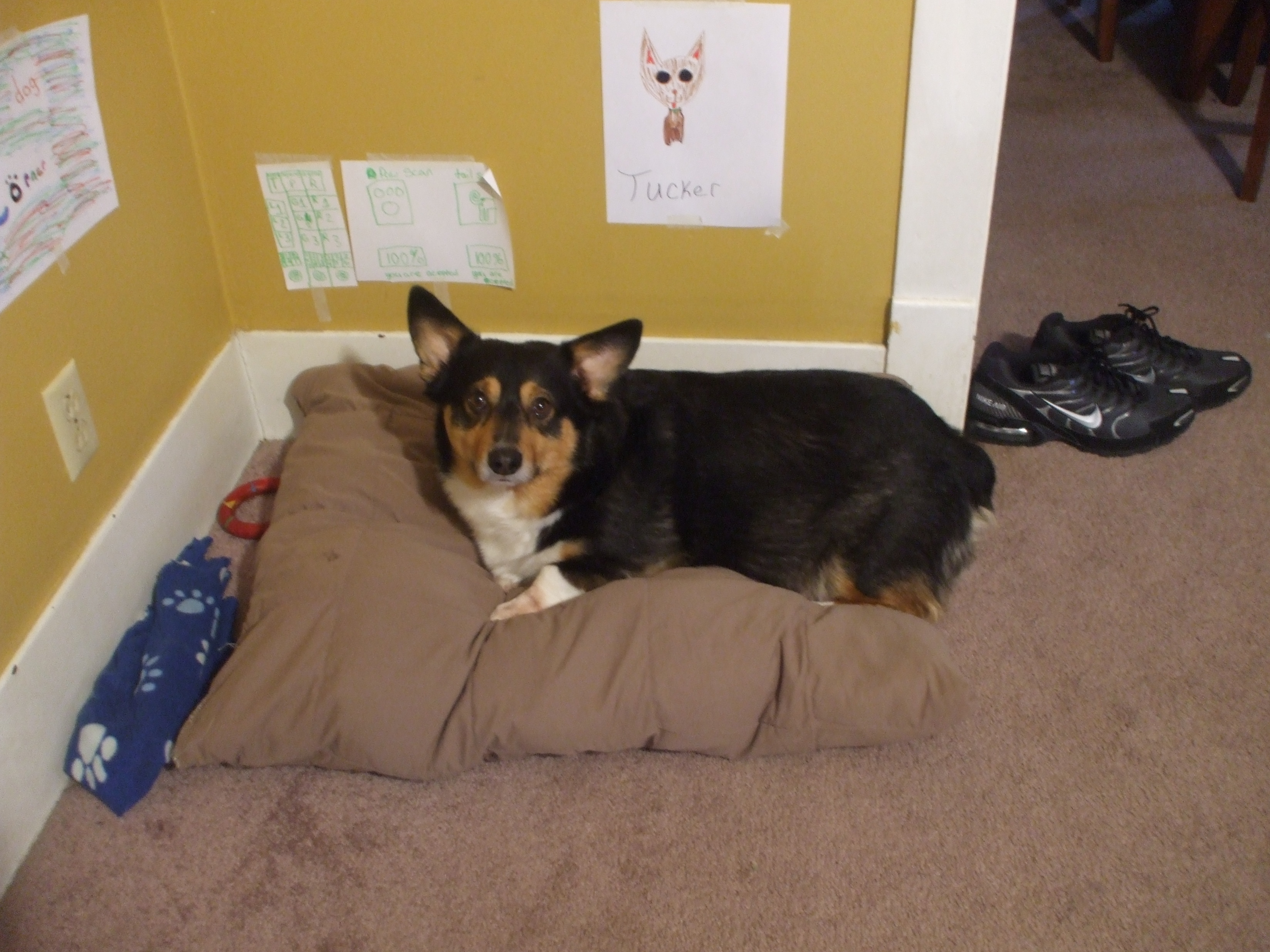 How to Sew a Pillow Dog Bed