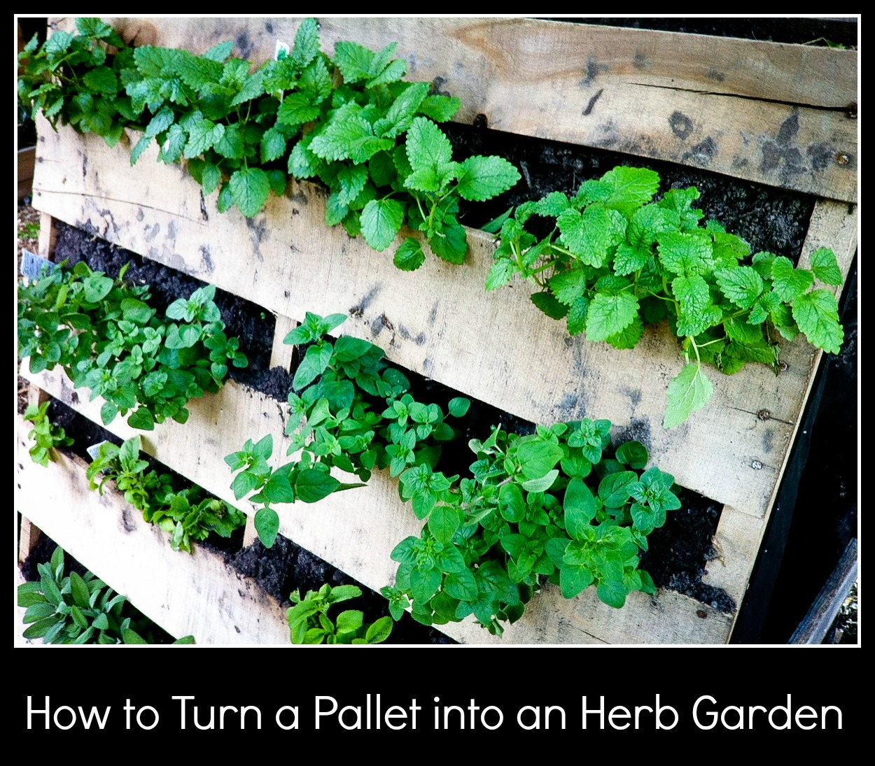 How To Turn A Pallet Into An Herb Gardenjpg
