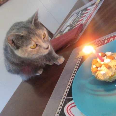 Tuna Birthday Cake for Your Cat