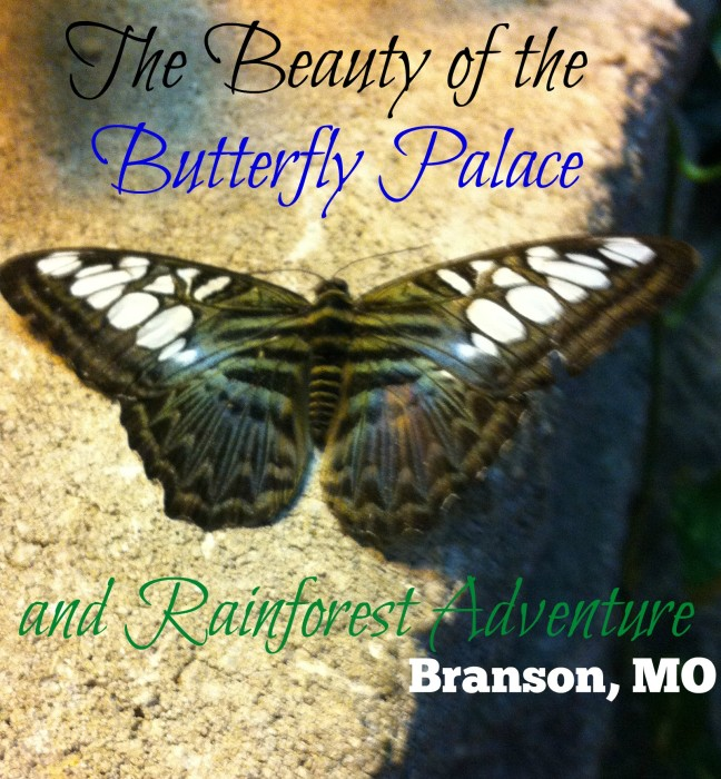 The Beauty of the Butterfly Palace in Branson Missouri