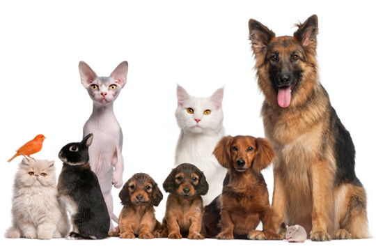 Giving Your Pet the Best Life You Can