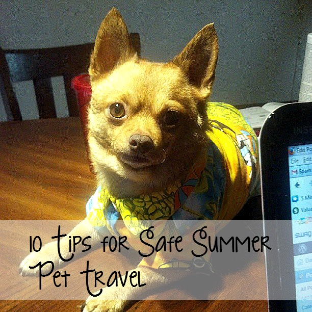 travel Tip for Dogs