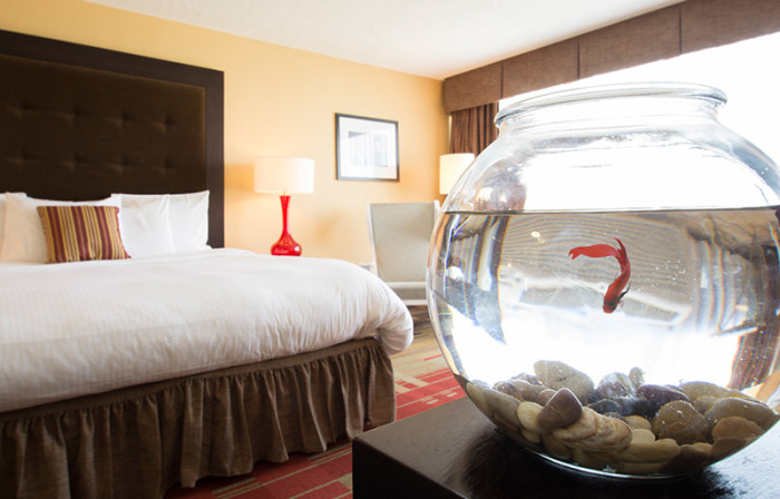 Hotel Preston will bring a fish up to your room if you are feeling lonely