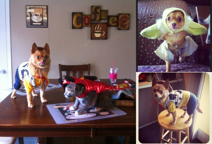 Play dress up with your pet