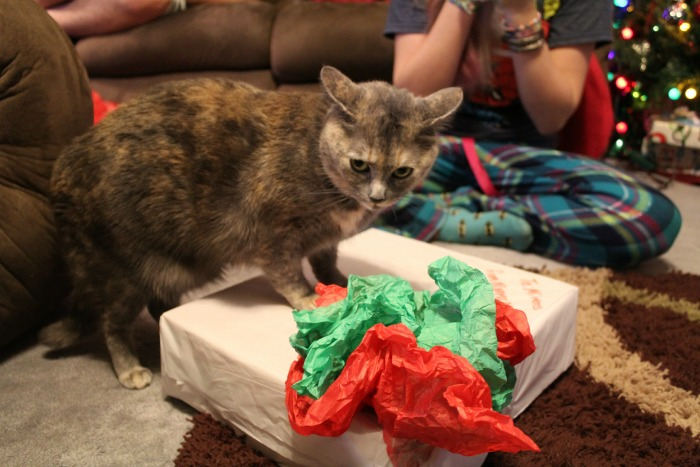 Mittens and her gift