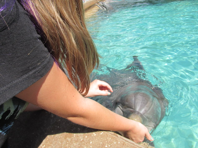 Kayla and dolphin 2