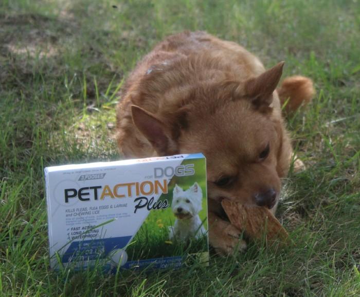 pet action