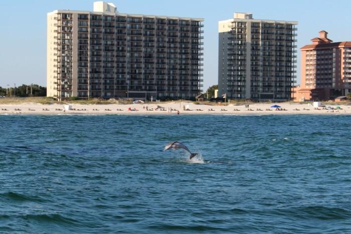 Dolphin Sail Wild Hearts