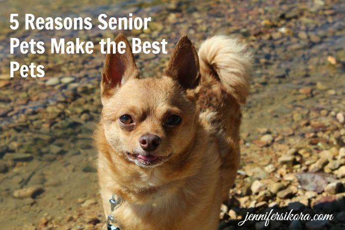 5 Reasons A Senior Pet Makes the Best Pet