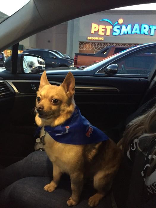 Tucker AFTER Pet Smart Grooming