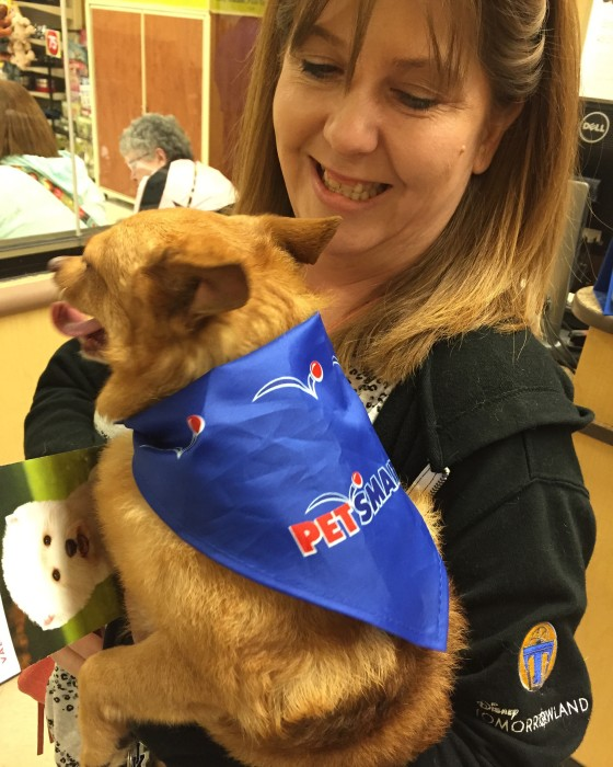 Tucker at Pet Smart Grooming