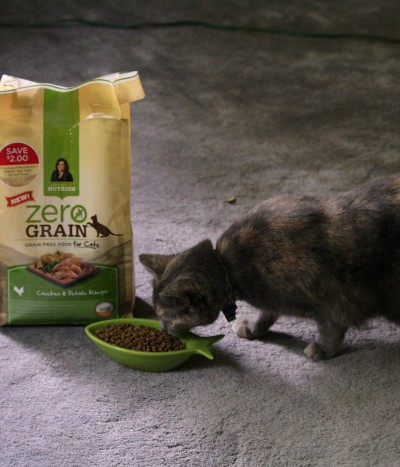 How to Plant Fun Treats for Your Cat + The New Zero Grain for Cats from Nutrish