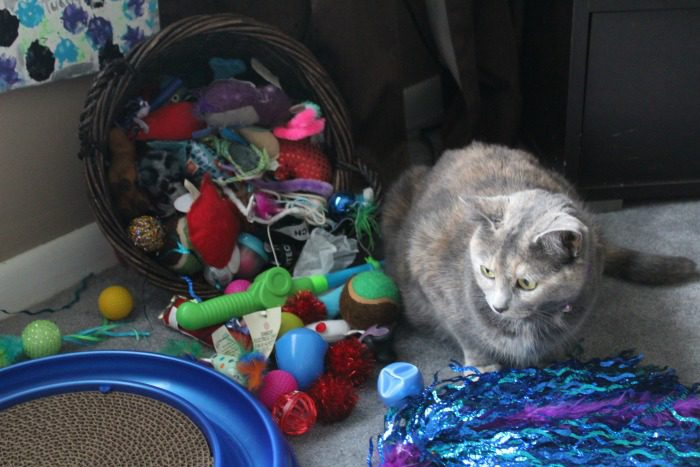 Mittens and Her toys