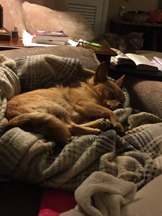Tucker sleeping 2