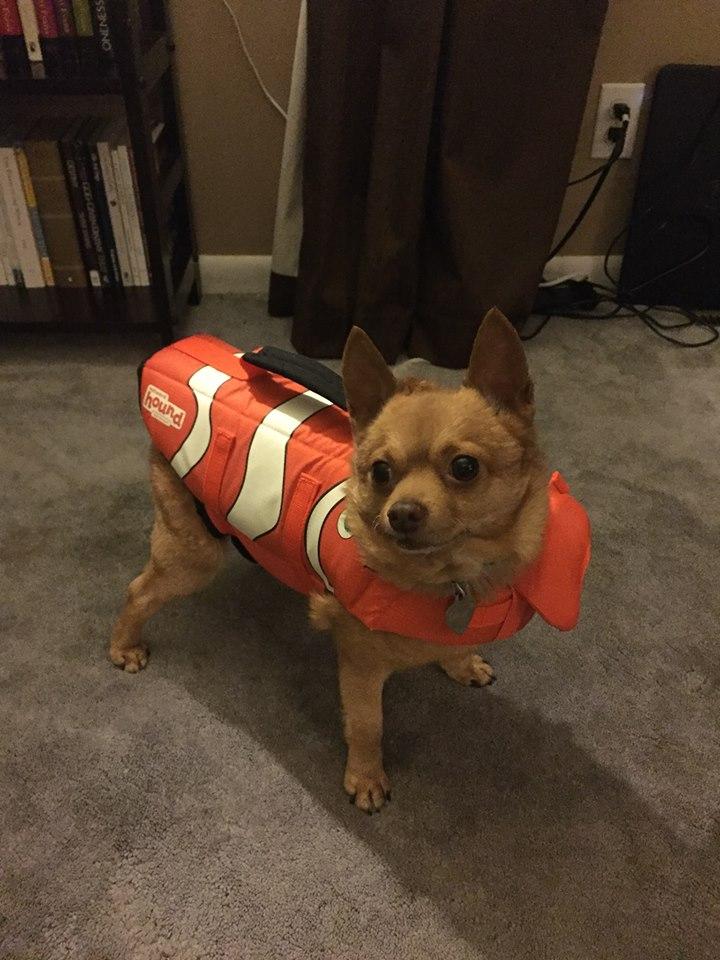 Tucker's Life vest