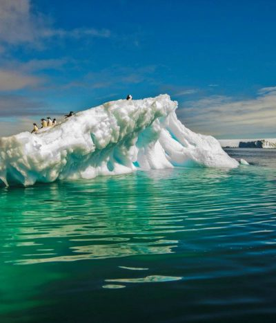 Surviving in Extreme Conditions of Antarctica