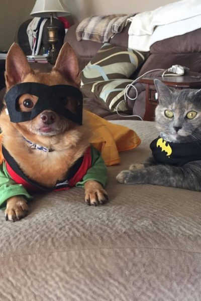 Find the Perfect Halloween Costume for You or Your Pet at Oriental Trading