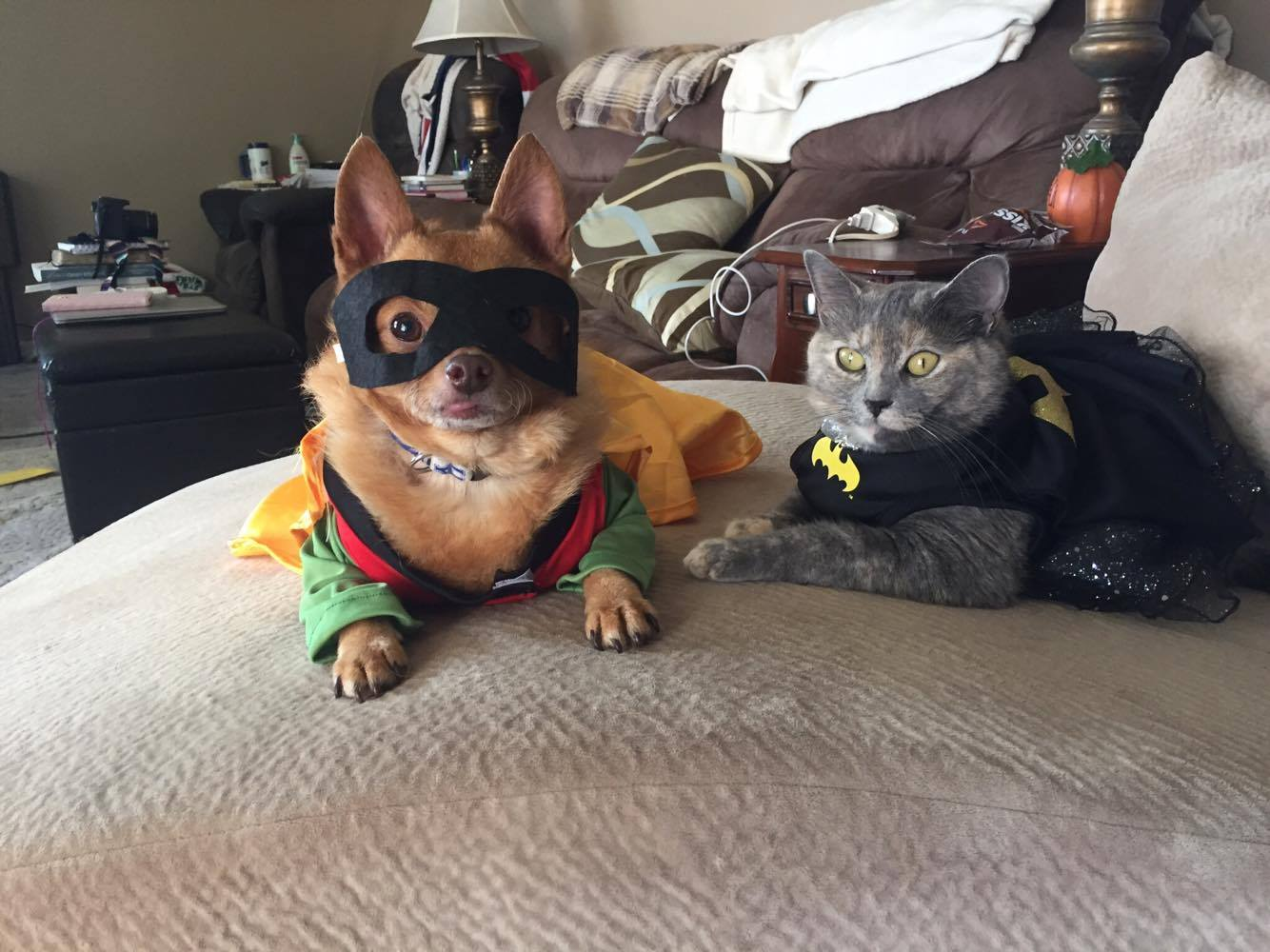 Tucker and Mittens for Halloween Nutrish