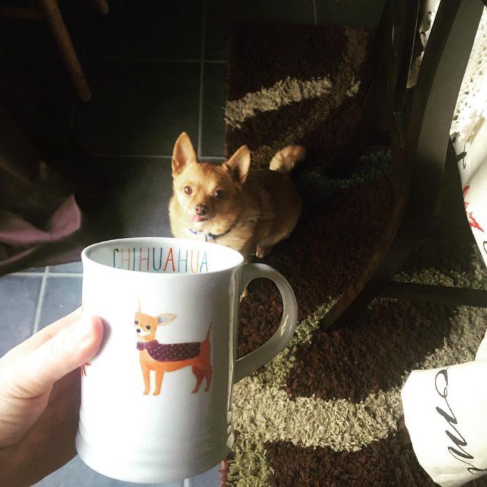 Tucker Mug PetSmart