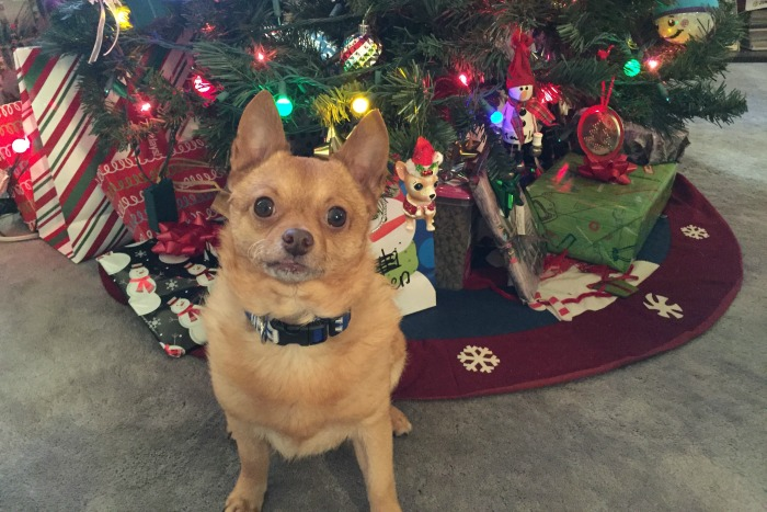 How to Get Your Pets Excited for the Christmas Holiday