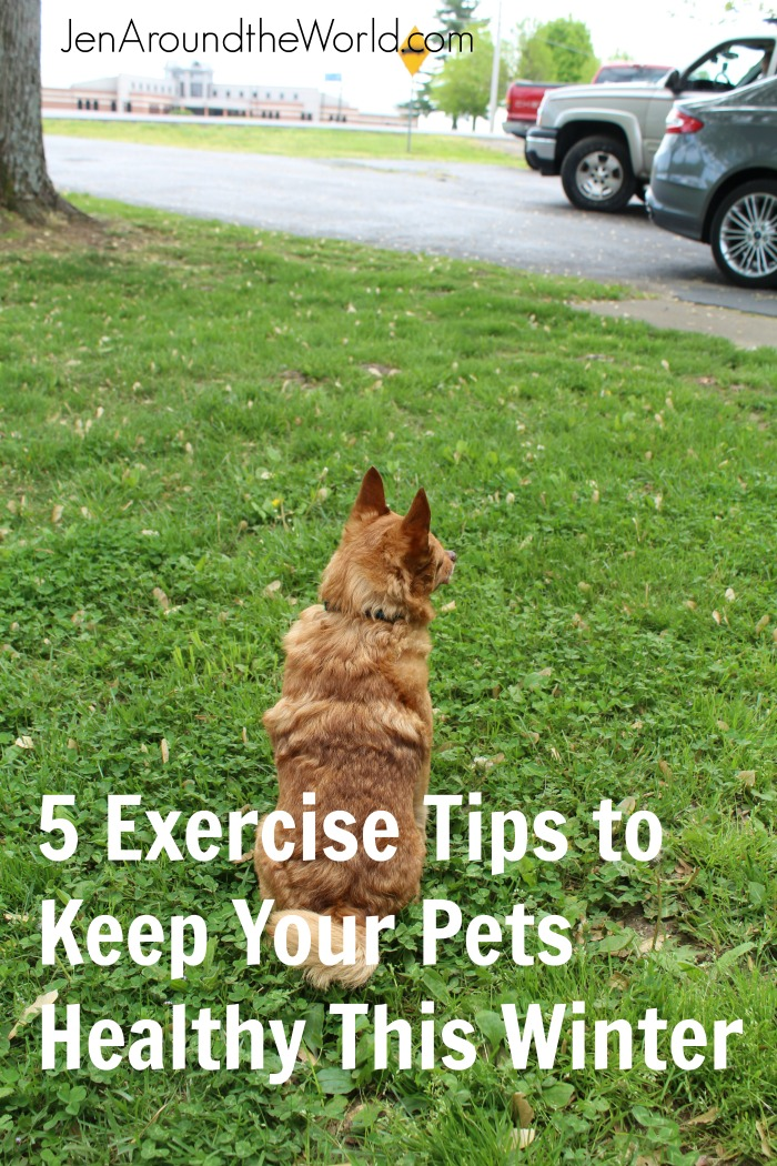 exercise pets 2