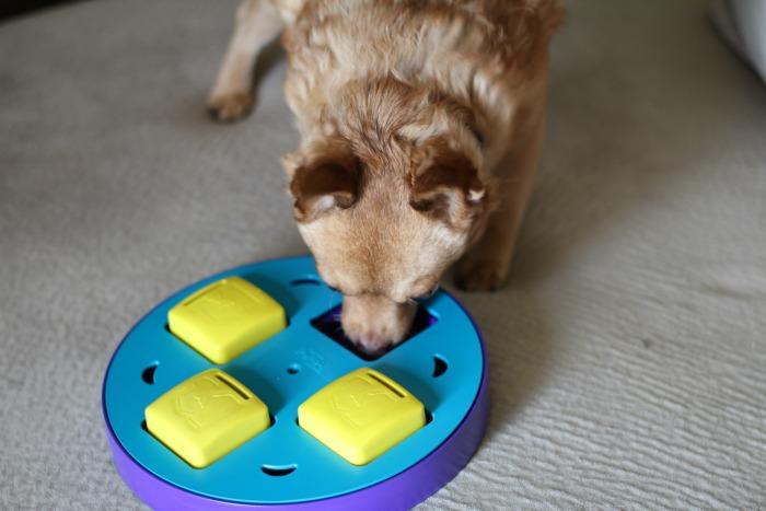 nutrish pawty game