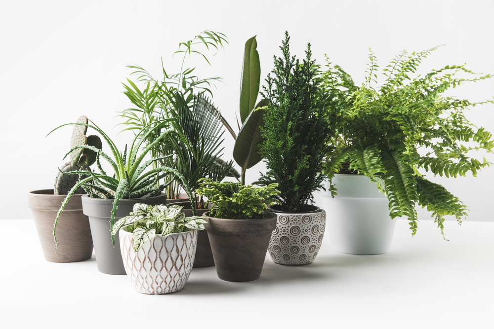 Best Houseplants for Cleaner Air