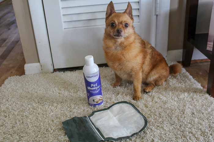 OdorKlenz Keeps Your Pets and Your Home Smelling Fresh