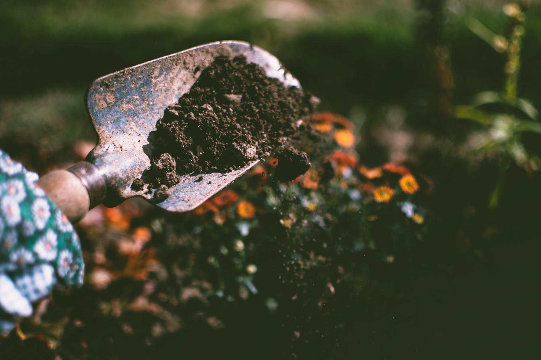 Top 8 tips to prepare your garden for Spring