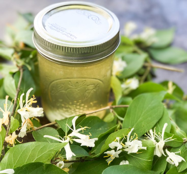 Honeysuckle Jelly - The Thing of Childhood Summers